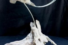 bird-petes-gallery-img10