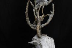 bird-petes-gallery-img6