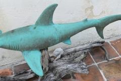 petes-sharks-img7