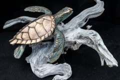 turtles-petes-gallery-img11
