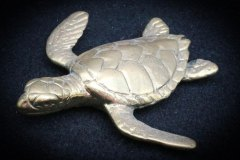 turtles-petes-gallery-img13